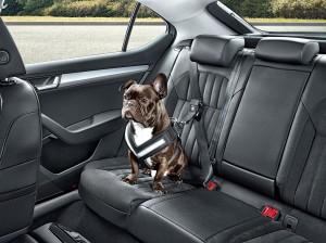 Přeprava psa v autě_autokabelky